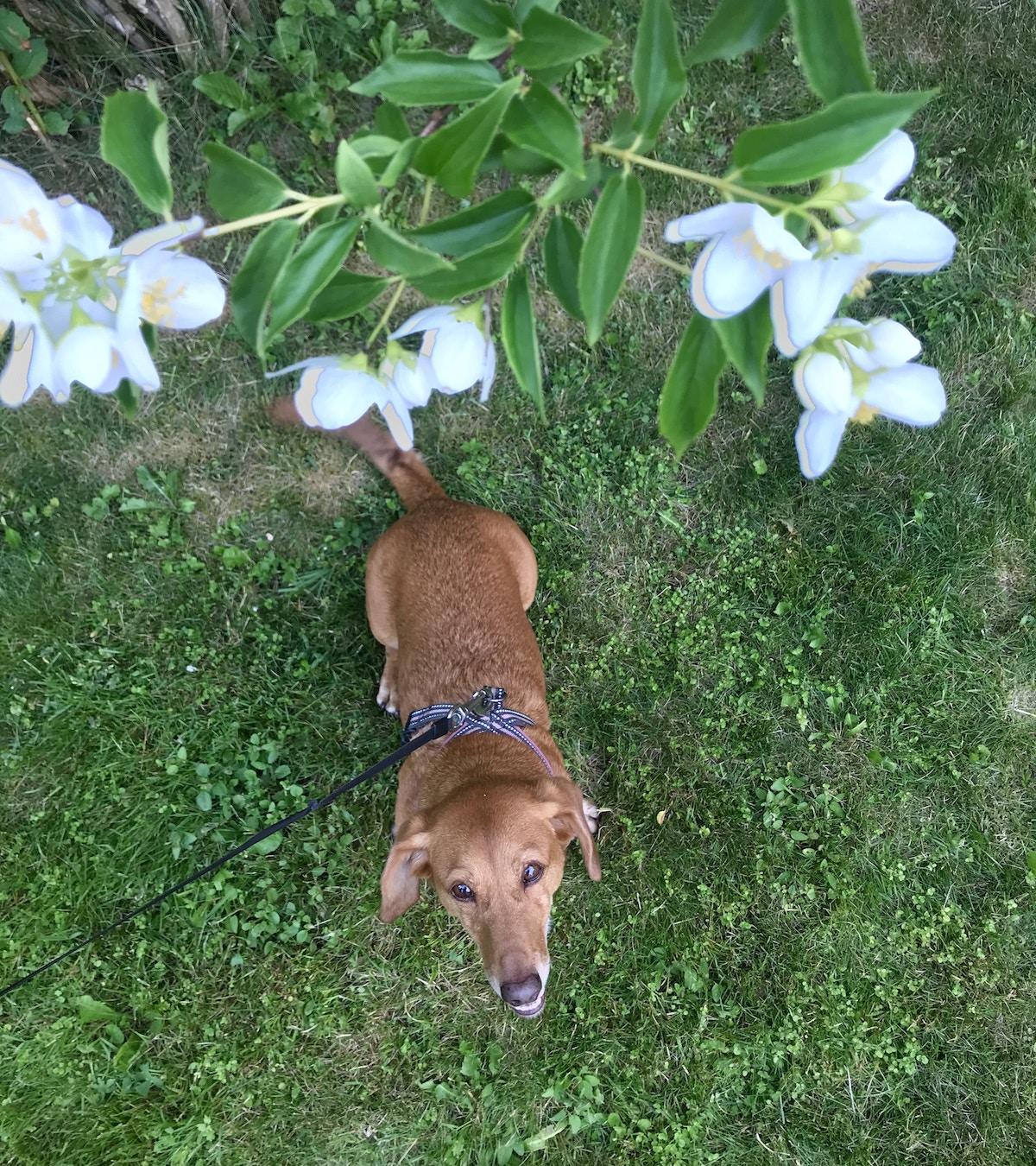 Blomsterbisk