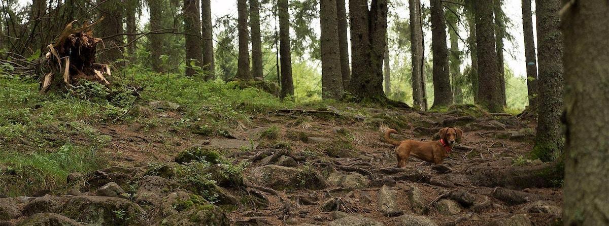 Liten bisk, stor skog