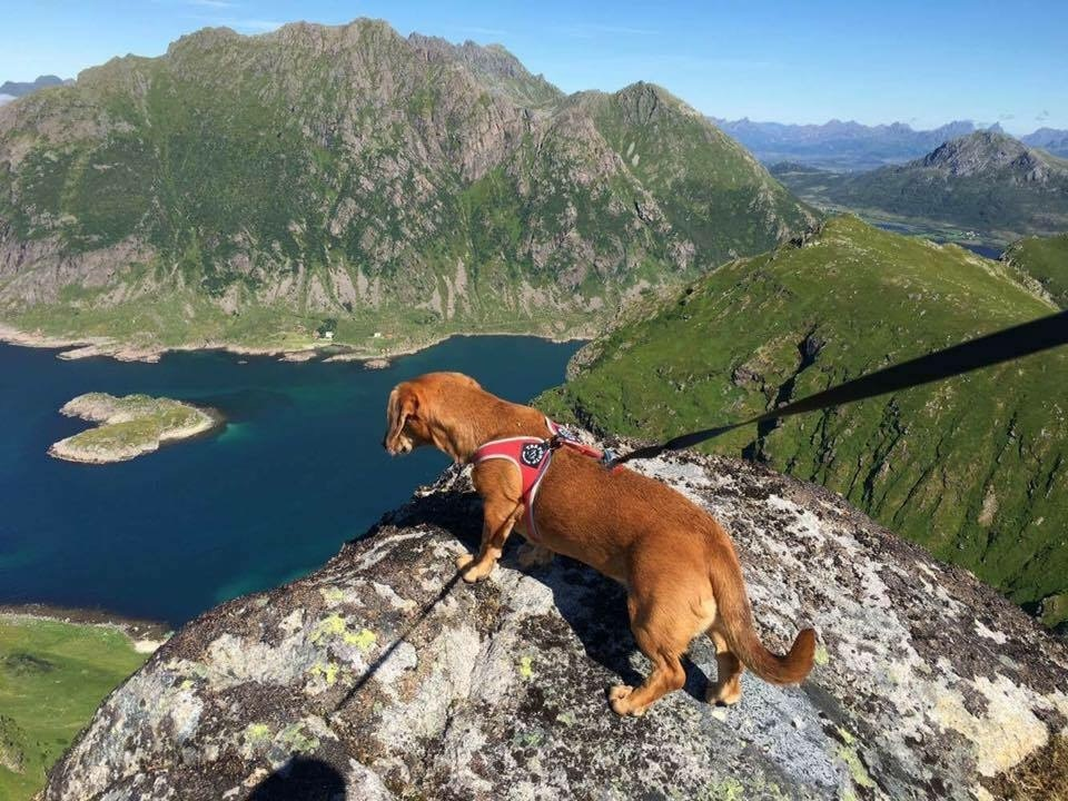 Nomi on top of the world