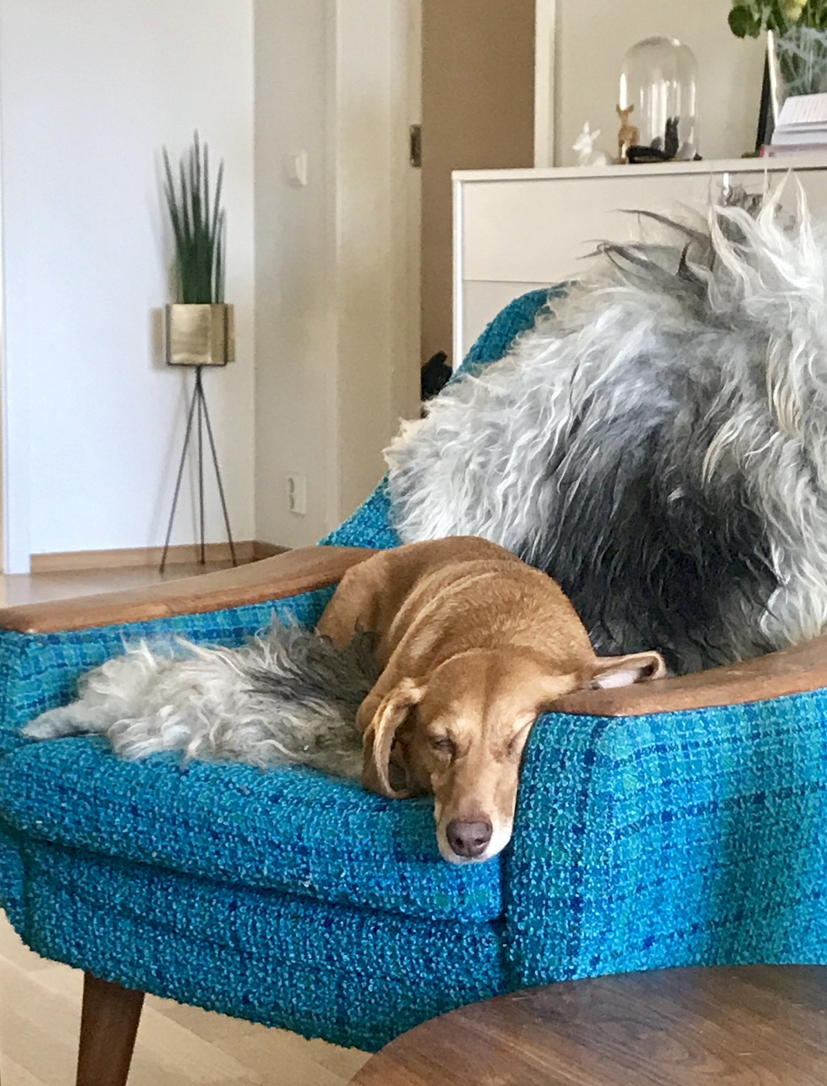 Sover ut i stolen