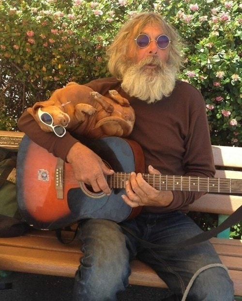 Funny Dachshund And Guitar Man