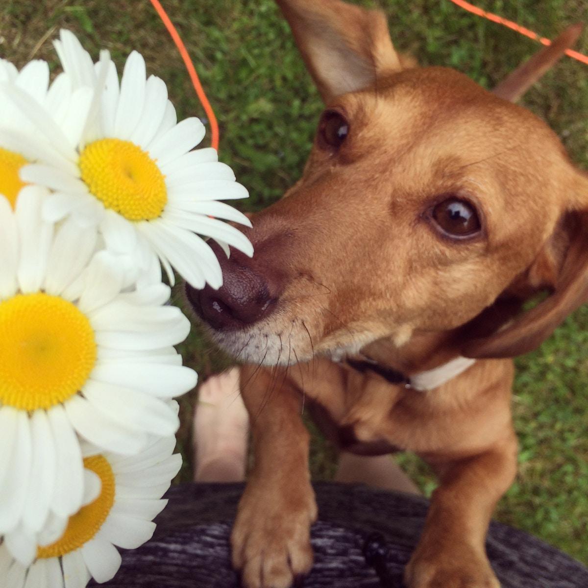 Lukter på blomstene