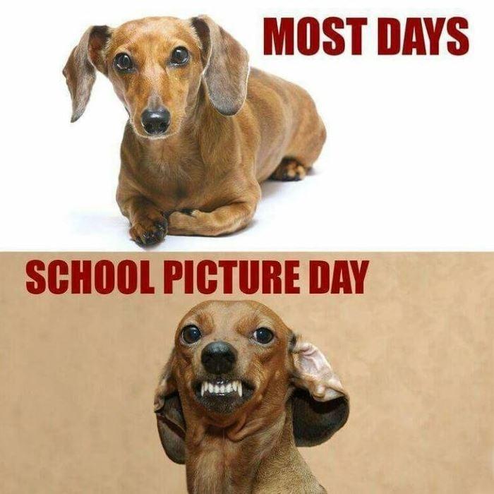 Most Days Dachshund Meme
