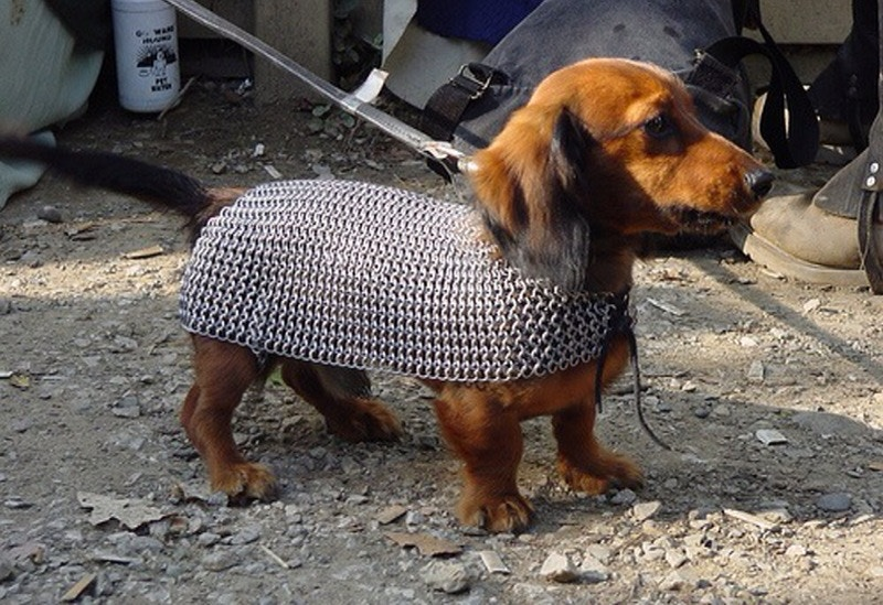 Protect Your Wiener Dog