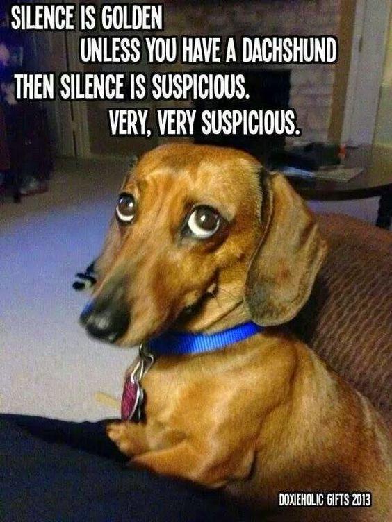 Dachshund Dog Silence Golden Meme
