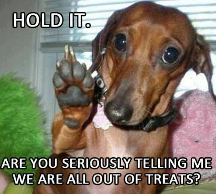 Hold It Dachshund Meme