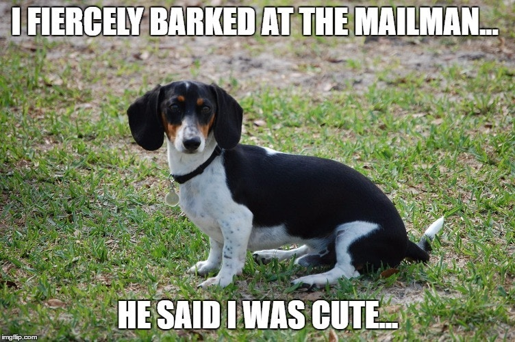I Fierely Barked Dachshund Meme