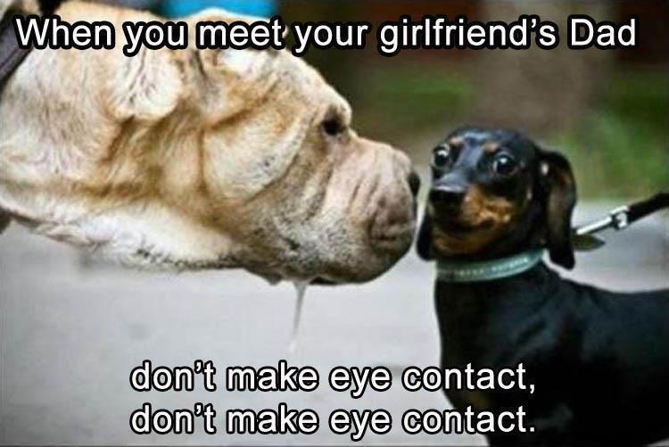 When You Meet Dachshund Meme